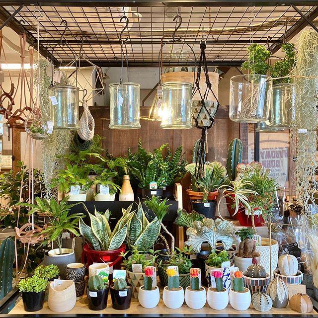 【 植物&花器 再入荷しています 】お部屋を彩るインテリアのひとつに🌱。観葉植物、フラワーベース。お好みを見つけて、お好きな場所に飾って、おうち時間をお楽しみください。