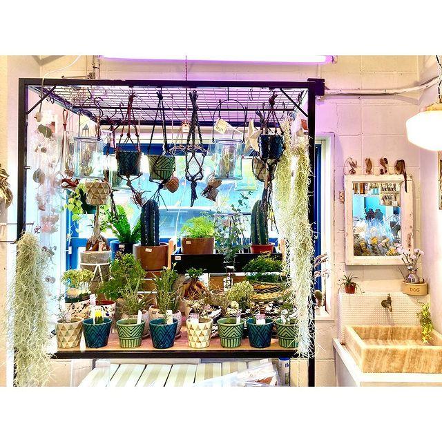 【 植物入荷しています 】お部屋を彩るインテリアのひとつに。お好みを見つけてお好きな場所に飾っておうち時間をお楽しみください。