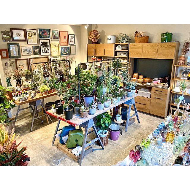 【 植物入荷しています 】いつもよりたくさん買い付けしてきました!フラワーベースもいろいろ♪お部屋を彩るインテリアのひとつに!